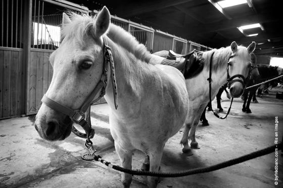 ris-orangis-en-images-dix-ans-installations-equestres-160611-markiii-300
