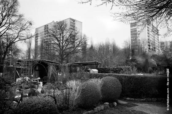 ris-orangis-en-images-les-jardins-familiaux-160319-markiii-548